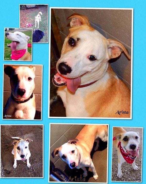1.10.15 - Escape Artist Dog Needs a Home2