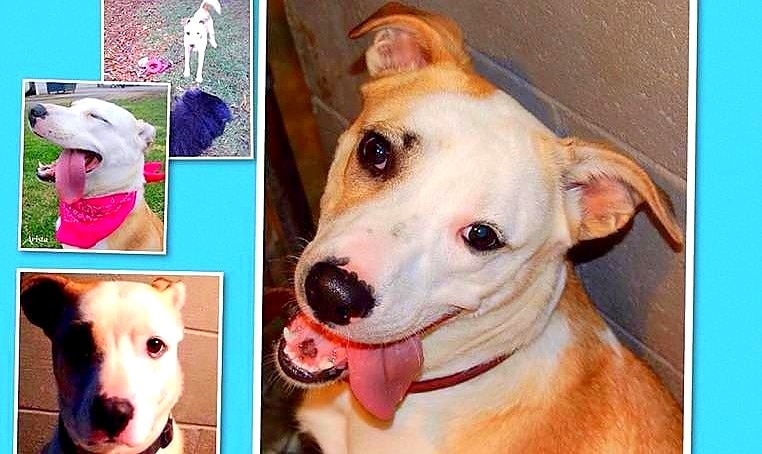 Home Needed for Adorable Houdini Dog
