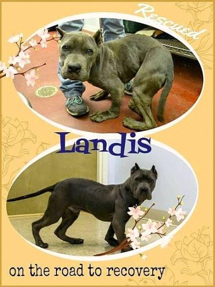 1.10.15 - Update on Landis1