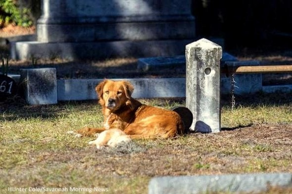 1.11.15 - Mama Dog Refuses to Leave Cemetery Where She Buried Her Puppy1