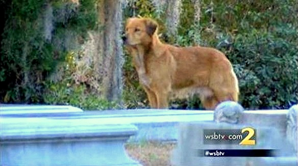1.11.15 - Mama Dog Refuses to Leave Cemetery Where She Buried Her Puppy3