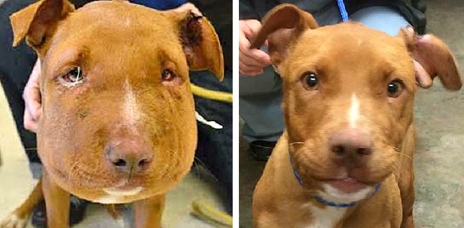 Balloon-Faced Puppy Makes Remarkable Recovery