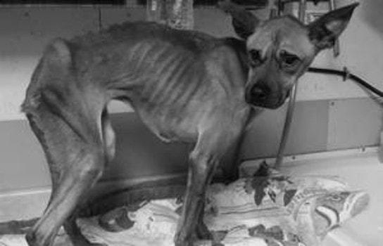 1.15.15 - skinny dog