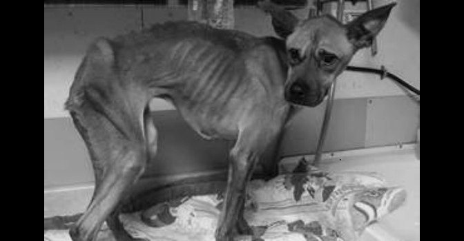 Man Arrested After Dropping Severely Emaciated at Local Shelter