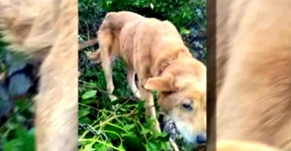 1.16.15 - Rescuers Save Dog Only to Have Her Returned to Abusive Owner2