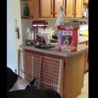 Crafty Bird Feeds Dogs Treats