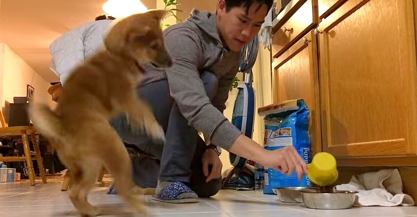 Puppy Has Hilarious Reaction to Food Dish Being Filled