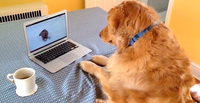Dog Just Wants to Play with the Dog on the Screen