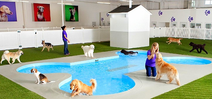 Specialized Animal Terminal Coming to JFK Airport