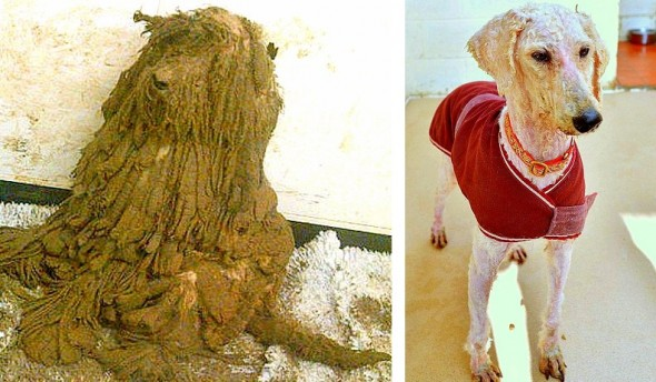 1.23.15 - The Transformation of These Neglected Dogs Will Shock You7