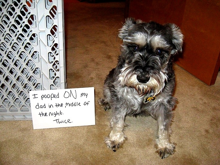 28 Very Naughty - But Incredibly Funny - Dogs - Life With Dogs