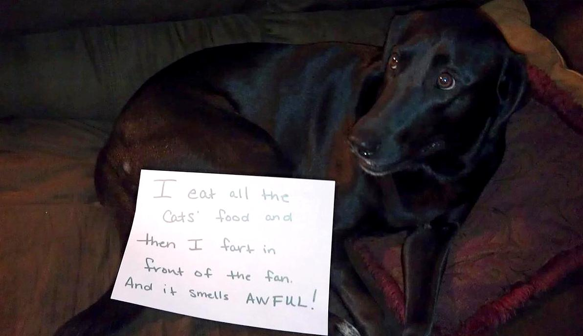 28 Very Naughty But Incredibly Funny Dogs