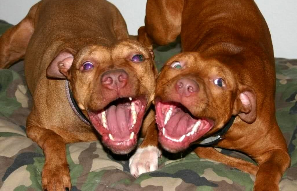 State Representative Aims to End Breed-Specific Insurance Clauses