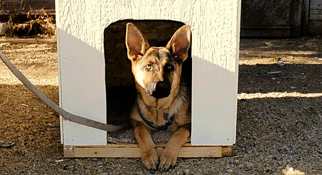 Students Build Dog Houses for Low-Income Families