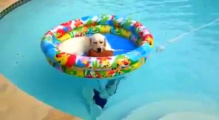This Dog Has the Right Idea!
