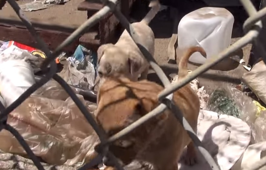 Hope for Paws in LA to Rescue Homeless Family of Dogs