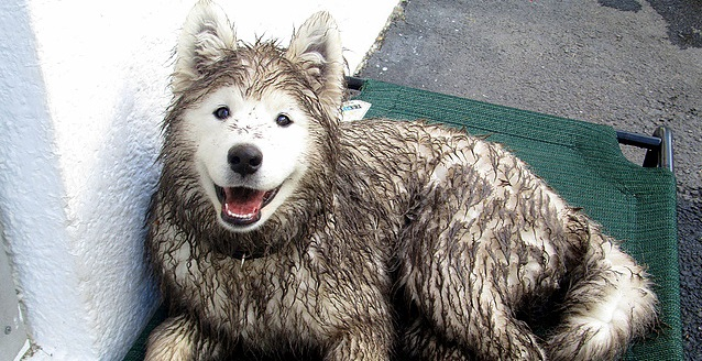 Wet Dogs Stink – Here's Why