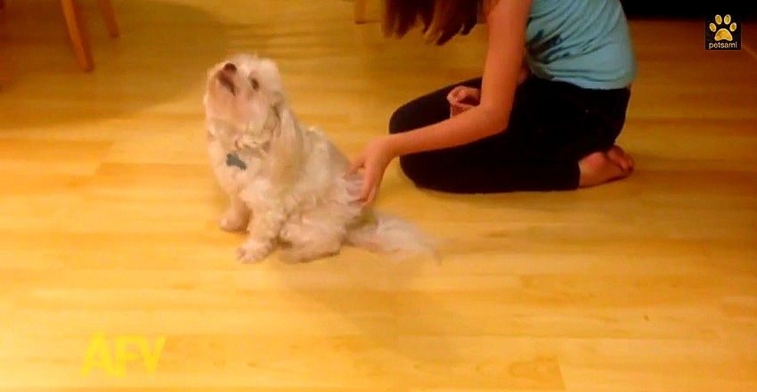 Dog Getting Butt Scratchins Vibrates Across the Floor