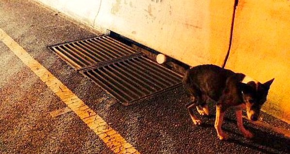 Officer Rescues Senior Dog from Busy Highway