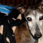 Senior Dog Found Almost Completely Frozen Solid Is Saved