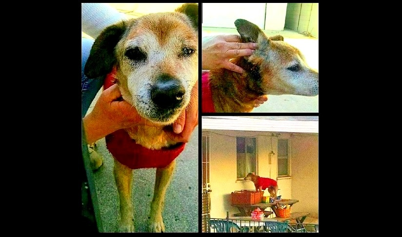 Senior Dog Needs to Know Love Before It's Too Late