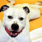 Dog Who's Spent Half of Life in Shelter Ready for a Home
