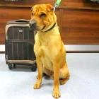 Dog Abandoned at Scottish Railway Station with Suitcase