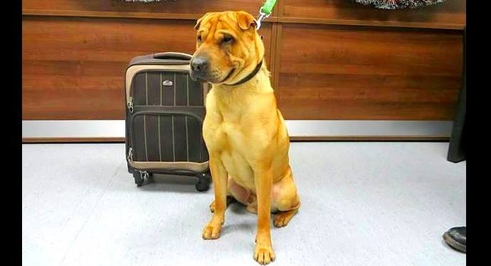 Dog Abandoned at Scottish Railway Station with Suitcase