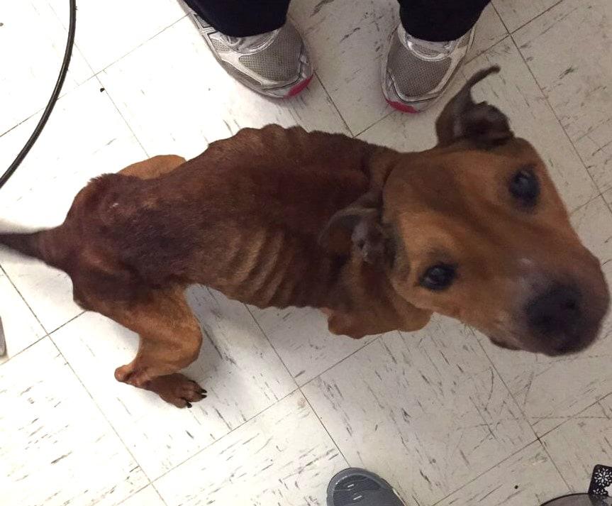 Animal Lovers Save Emaciated Dog Found Near Grade School