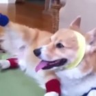 Dogs Doing Funny Things