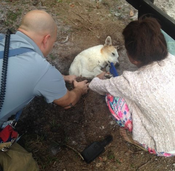 Firefighters Rescued Dog from Sinkhole