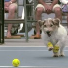 The Best Ball Boys in the World are Dogs