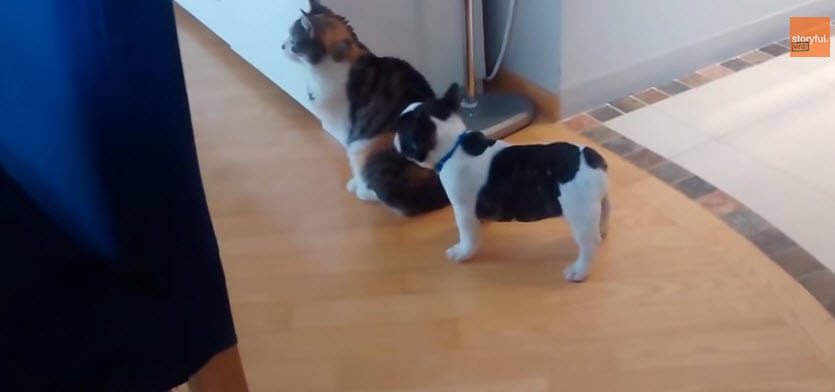 Puppy Wants to Play with Cat