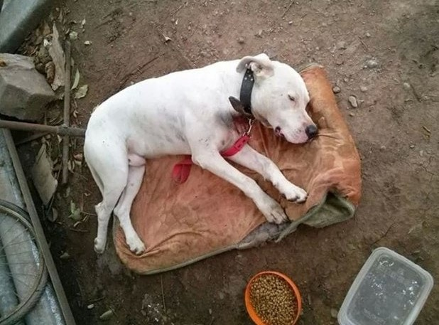 Dog rescued from abusive living situation.