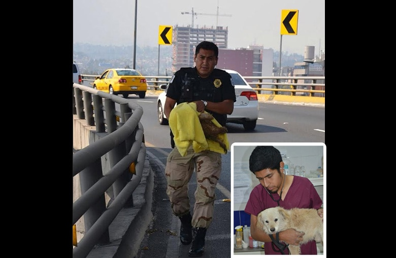 Animal Cops Rescue Injured Dog from Highway