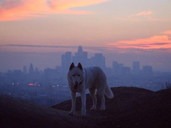 Photos: Beautiful Panoramic Photos Featuring Rescue Dog
