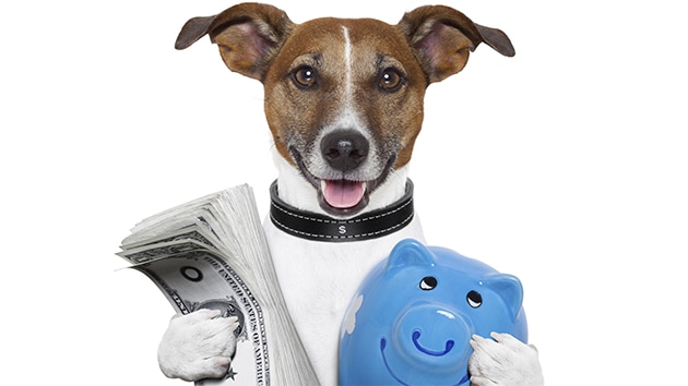 "Dog ""Plays"" Lottery and Wins $3 Millions"