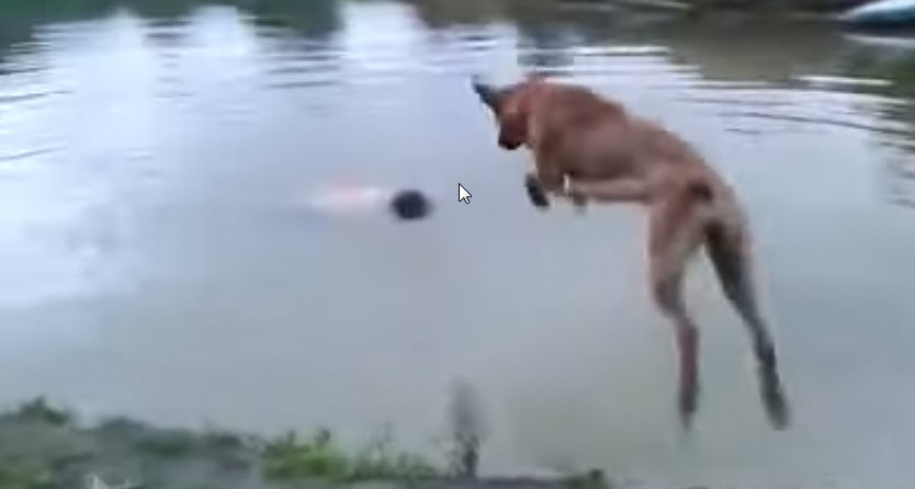 "Dog Dives into River After ""Drowning"" Owner"
