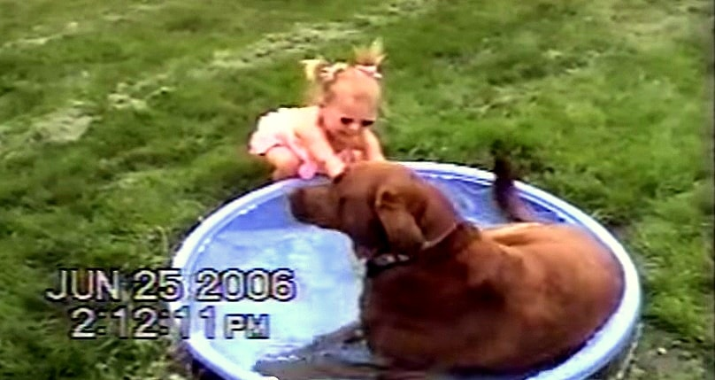 Chocolate Lab Takes Over Toddler's Duck Pool