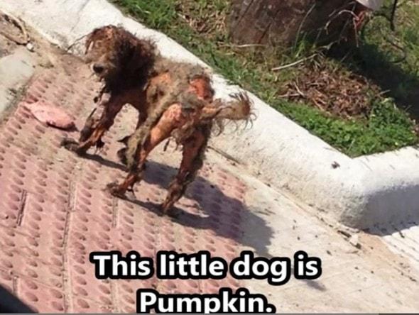 Untitled - pumpkin before