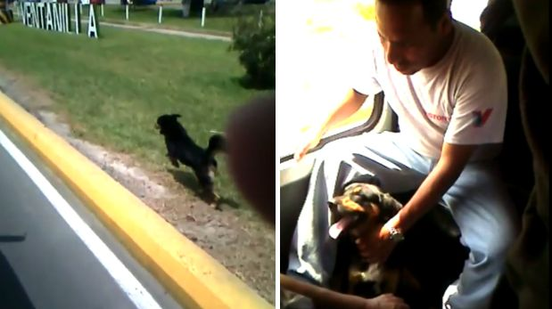 Pet Owner Rides Bus and Loyal Dog Won't Stop Chasing after Him
