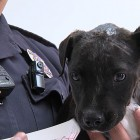 Police Officer Rescues and Adopts Discarded Bait Dog