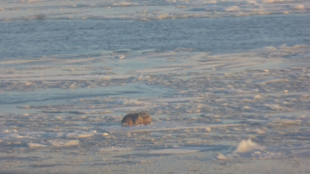 Animal Lovers Hope to Rescue Dog Stranded on Floating Ice Sheet