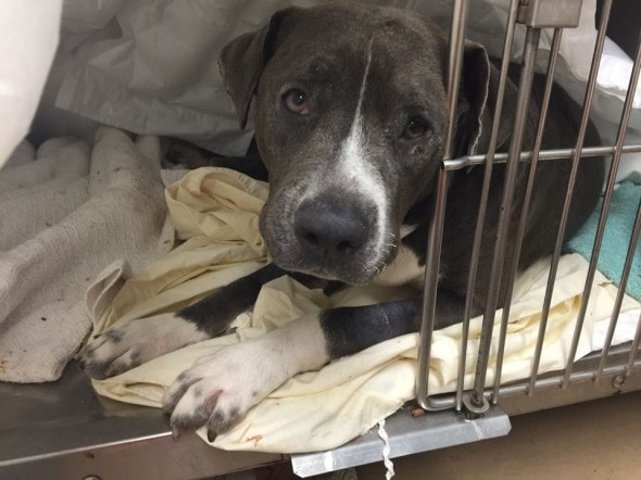 Rescuers Help Pregnant Dog Set On Fire