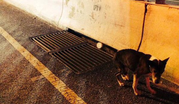 Baltimore Police Rescue Dog on Highway
