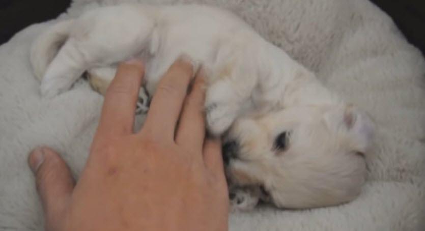 Ten Cutest Puppies Ever