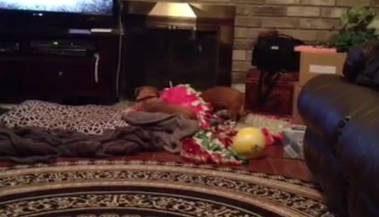 Video: Get Off My Pillow
