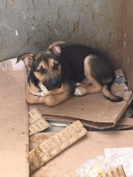 Dog rescued from dumpster. Photo Credit: Gary West