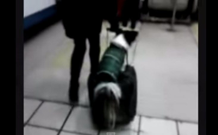 Dog Finds Faster Way to Travel