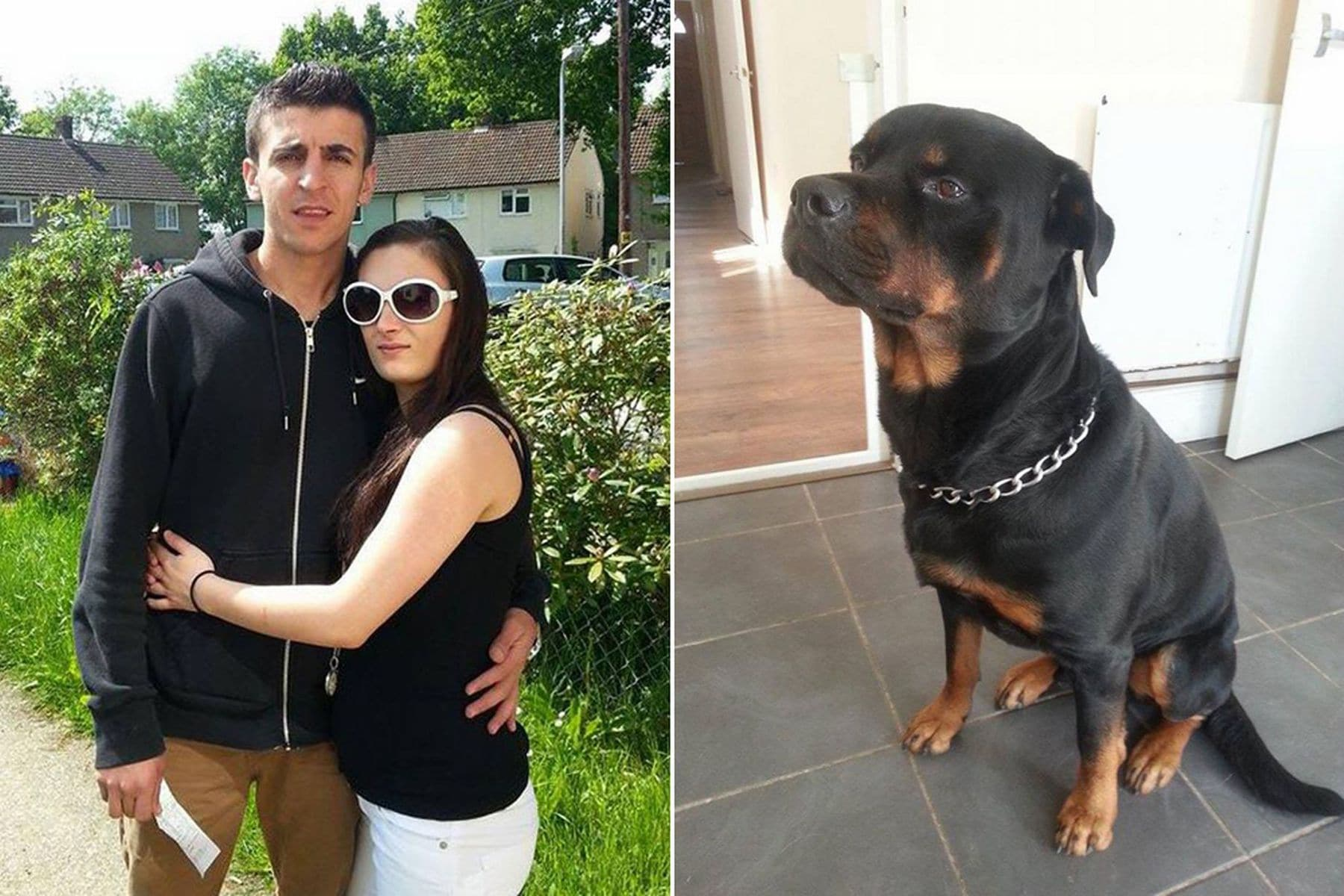 Rottweiler Protects Pregnant Owner from Armed Robbers